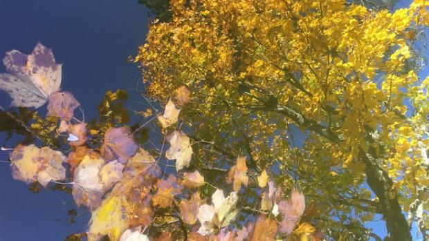 fleurs_japon